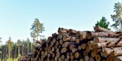 Fraudes esquentam madeira brasileira vendida ilegalmente para o exterior